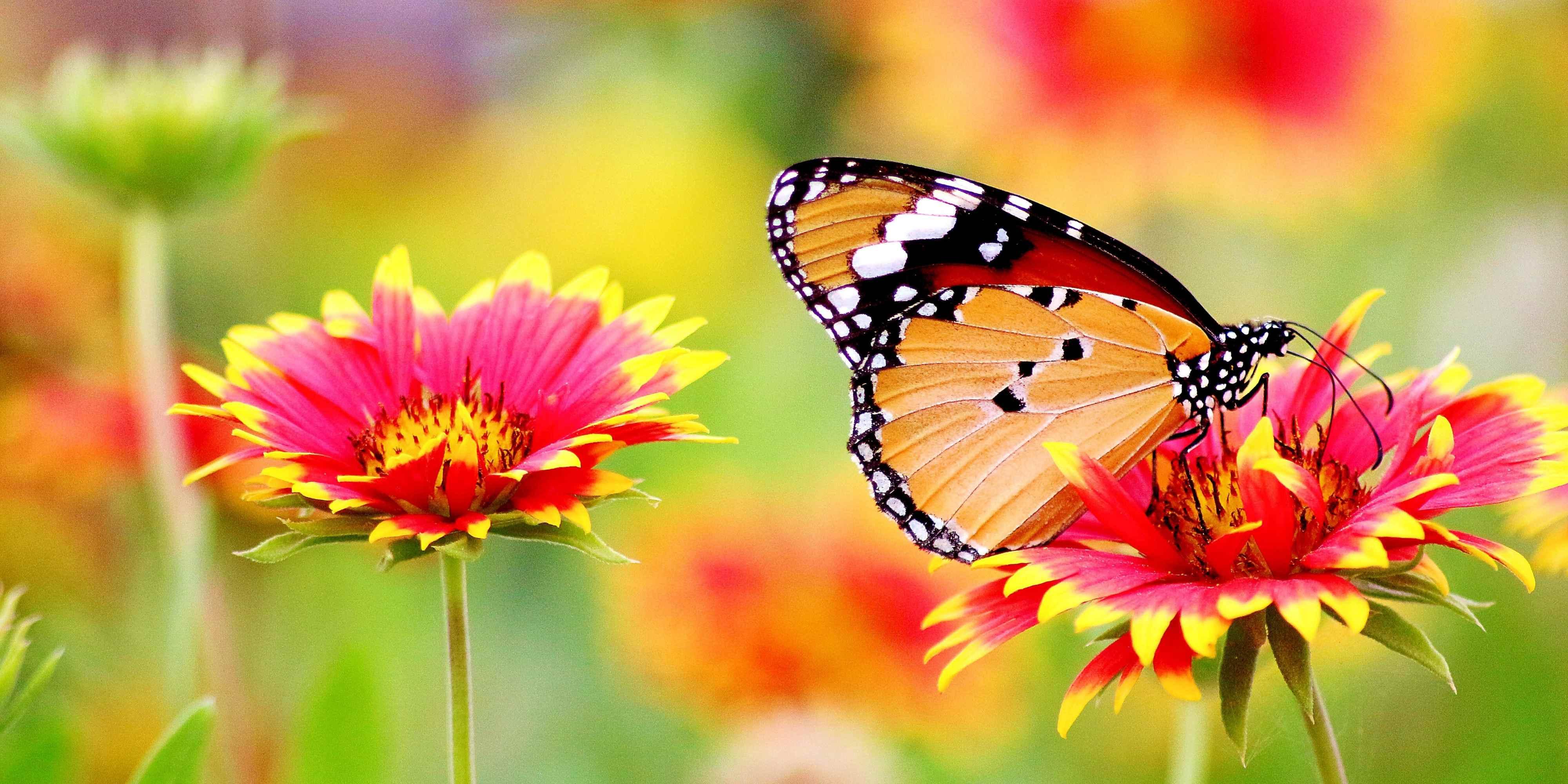 Progetto educativo per la scuola primaria con approfondimento su tematiche relative alla vita delle farfalle