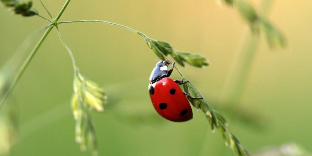 Progetto educativo per la scuola primaria con approfondimento sul mondo degli insetti e degli invertebrati