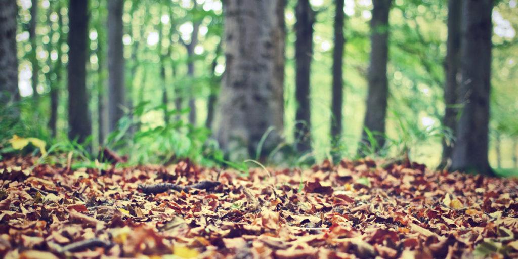 Progetto educativo per la scuola primaria e secondaria con approfondimento di tematiche relative alle scienze naturali e forestali