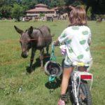 bici e asinello