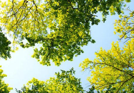 meta-attività-botanica-cicloturismo